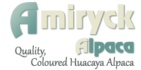 Amiryck Alpaca – Breeders of quality, coloured alpaca with alpacas for sale